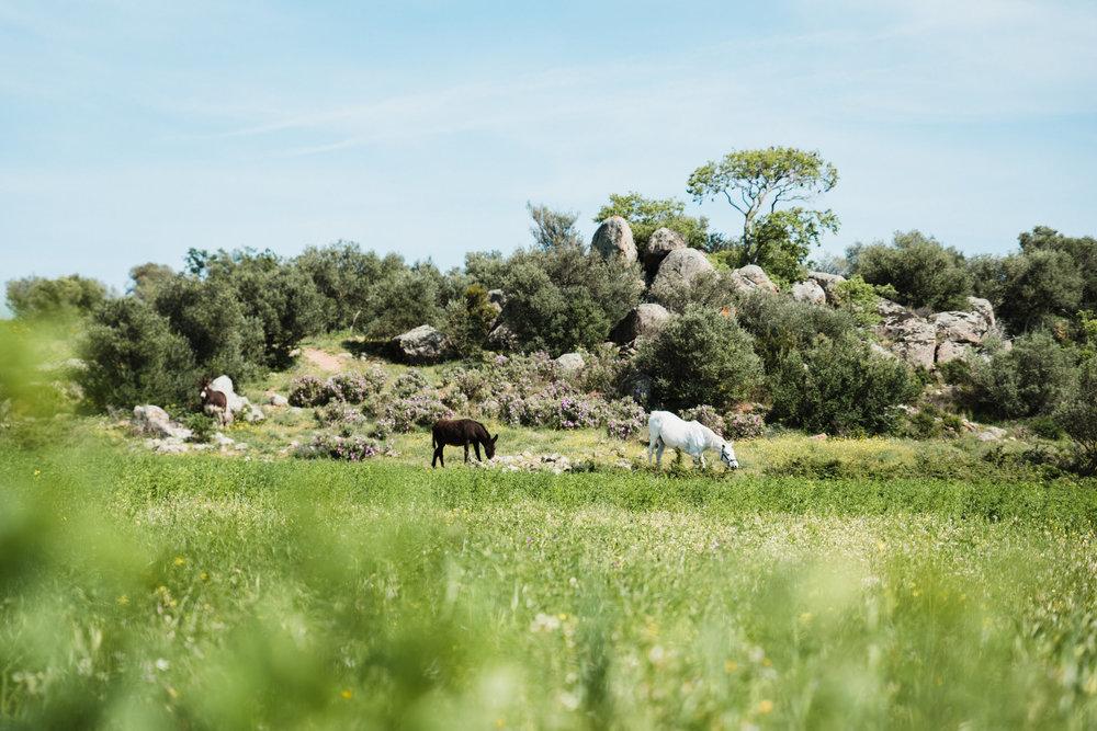 NATURALEZA - Selección de experiencias en la naturaleza