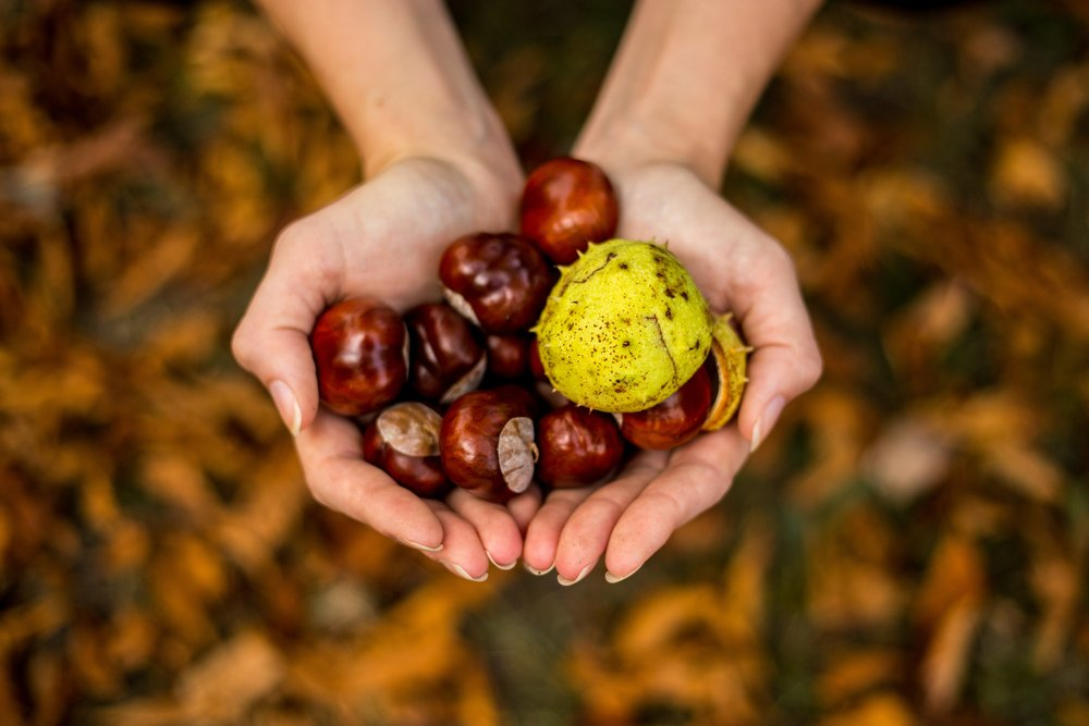 Chestnuts experience - When is chestnuts time…!Autumn is perfect for hiking... this is why in Feel by Doing we always love to offer you something else!We propose you a day trip to the Montseny Natural Park, where you will collect chestnuts and discover a chestnut recovery project that also promotes sustainable and local production.The activity includes a guided visit and local artisan products tasting.Price: from € 10 per person