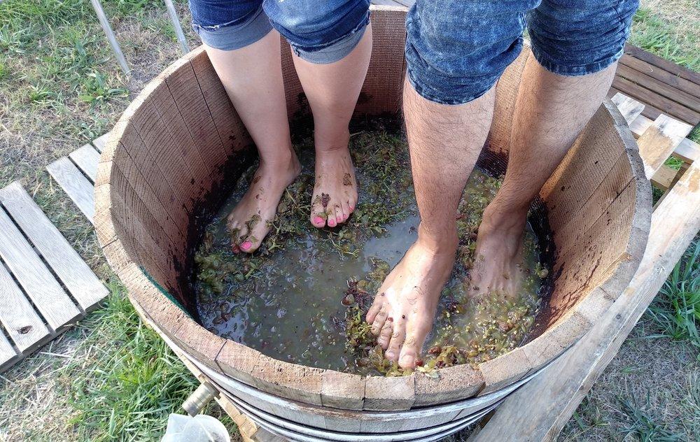 Actividades de vendimia - Durante el tiempo de vendimia, muchas bodegas en Catalunya ofrecen un sinfín de actividades...- Recoge la uva y participa del proceso de producción como se hacía antiguamente... pisándola- Cata de mosto: visita una bodega local, sus viñedos y la zona de depósito donde fermentan. Podréis degustar diferentes tipos de mostos, conocer sus variedades, gustos y olores y diferenciar cuales se destinan al vino y cuales al cava.-Cata de la uva entre viñedos: paseo por la finca para degustar de las variedades e uva directamente de los viñedos donde crecen.Precio: desde 25€ por persona