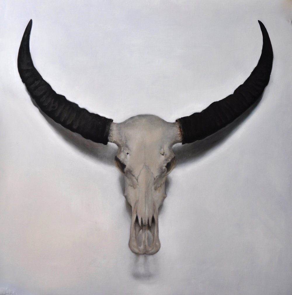 Indian Cow Skull- still life SOLD