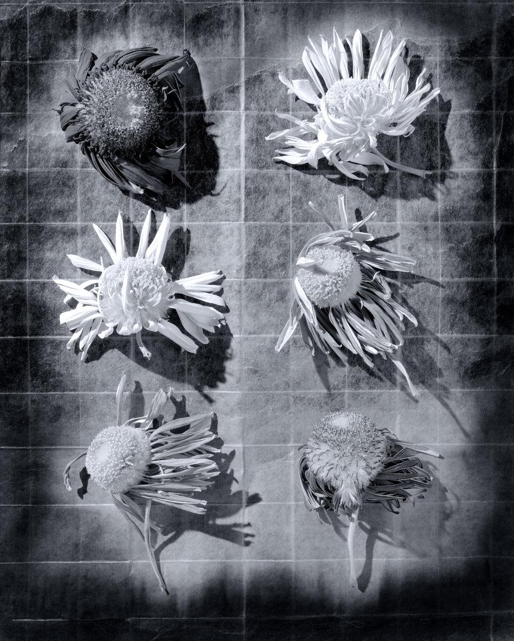 6_Flower_Heads.jpg
