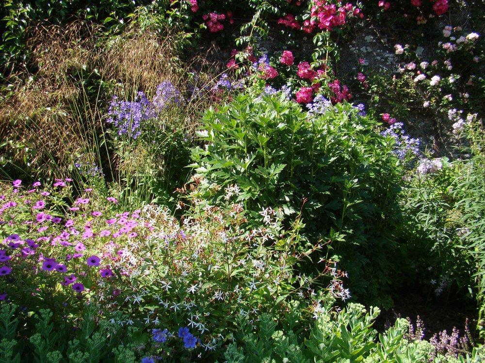 Glin herbaceous border 2.jpg
