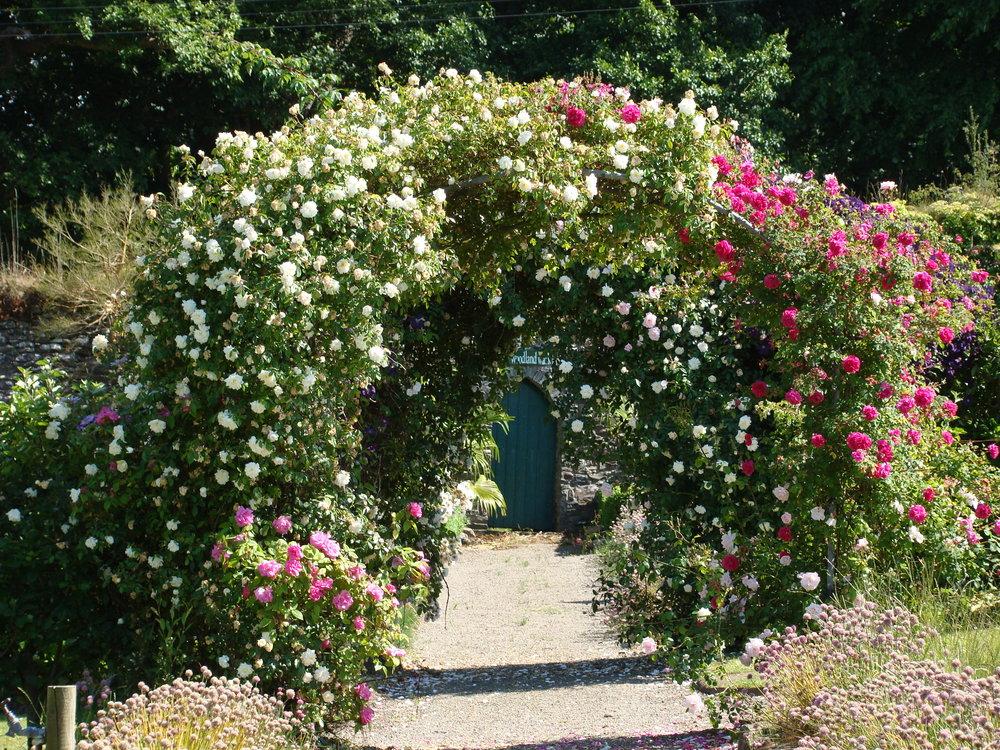 GLIN rose arch(265).JPG