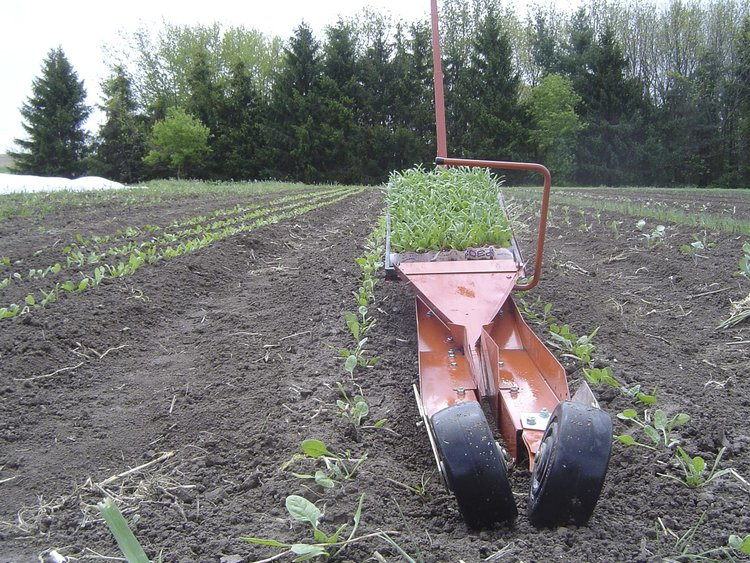 Transplanter-Spinach.jpg
