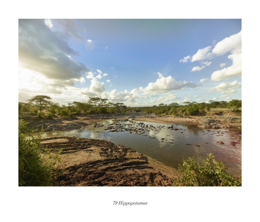Serengueti (TAN 10.1)t