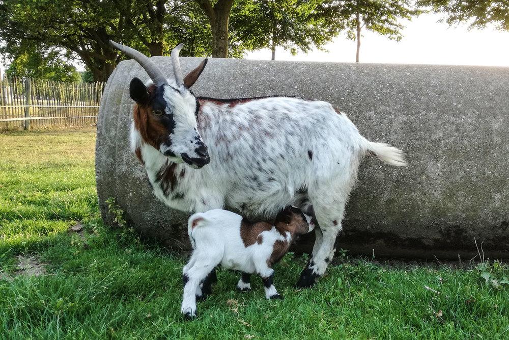 boerderijcamping-de-mebel-geiten02.jpg