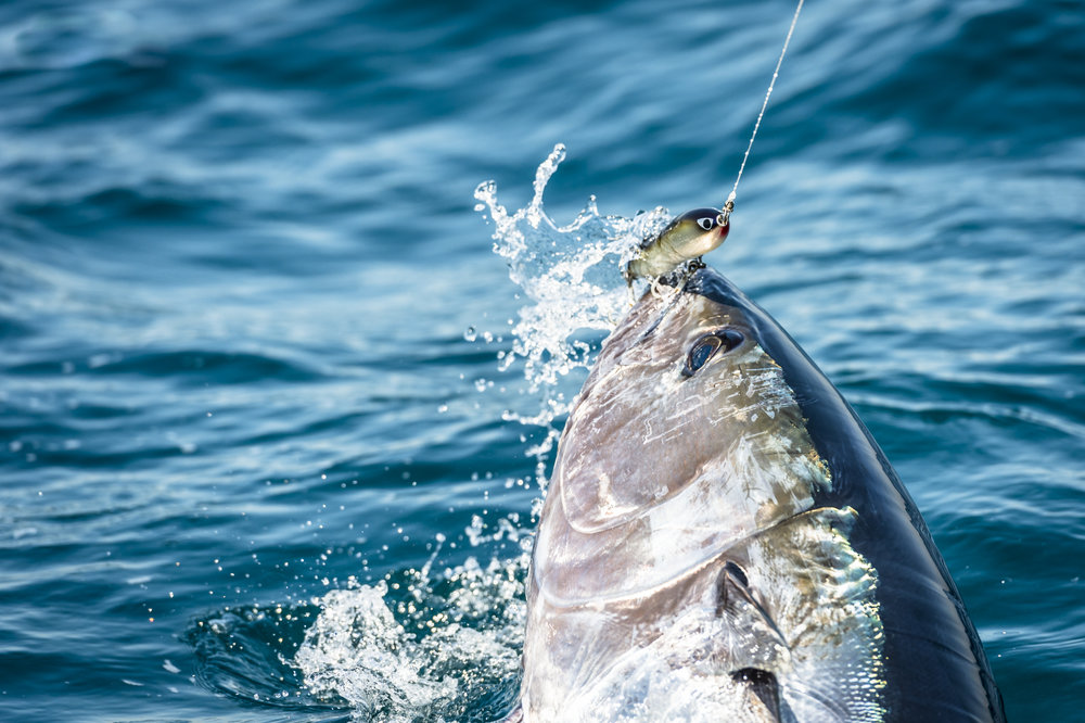 tuna (1000 of 1).jpg