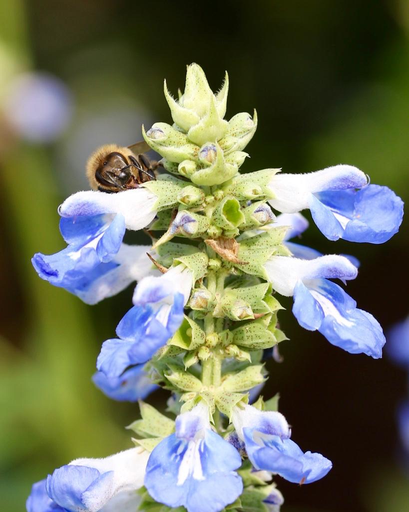 Bees - 1.jpg