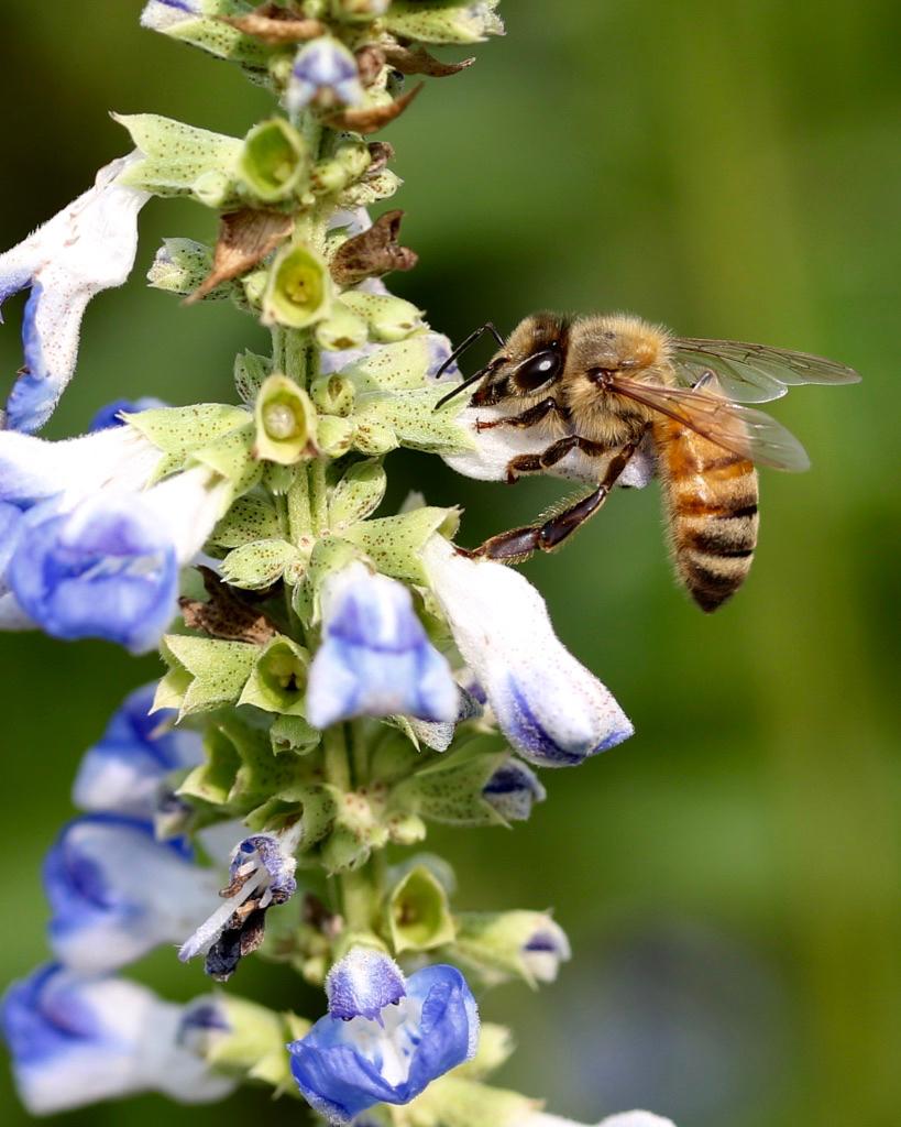 Bees - 2.jpg