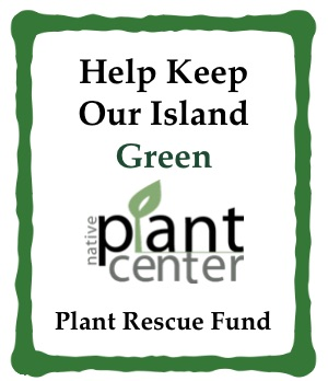 Take Action - Help us preserve plant life on South Padre Island. We are introducing proper pruning guidelines to prevent the loss of palms, a signature plant for South Padre Island and our region. We have advanced new policies to prevent mature plant loss and saved over seventy plants ourselves. But, we need your help to do more. There are so many ways to get involved.