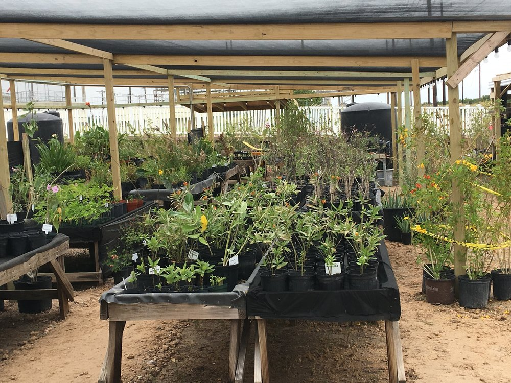 We protect plants. - The Native Plant Center was established to provide a local source of native plants and preserve coastal plant ecosystems. In our shade cloth nursery we grow plants to support butterflies and bees, fish in our waters and birds in our trees, to stabilize our coastlines, our beaches and dunes, and our ability to rebound from catastrophic coastal monsoons. With your support, we will add an ecotourism venue and botanical garden bringing new visitors to the island. The Native Plant Center is an advocate for sustainable plant management and care—a voice that was previously missing on the island—and we need your support to continue our vital work.