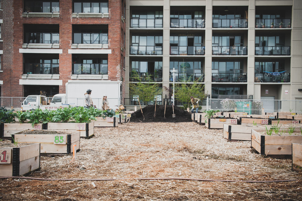Raised_Garden Beds_Community_Garden_Vancouver - South_False_Creek_Garden - 24.jpg
