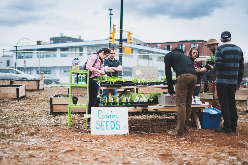 Shifting_Growth_Raised_Garden Beds_Community_Garden_Vancouver - South_False_Creek_Garden - 4.jpg