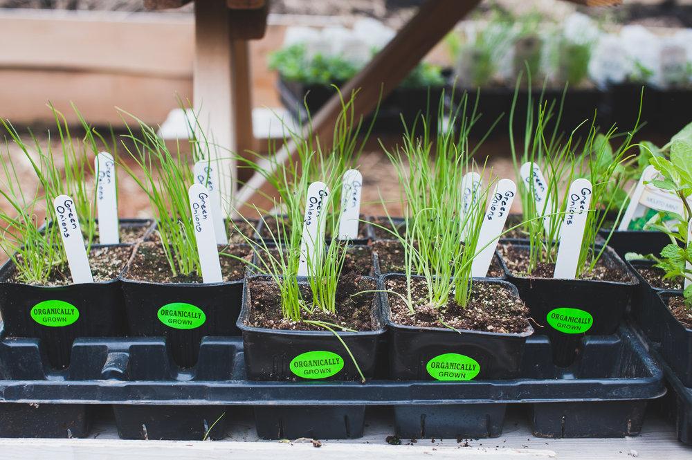 Shifting_Growth_Raised_Garden Beds_Community_Garden_Vancouver - South_False_Creek_Garden - 6.jpg