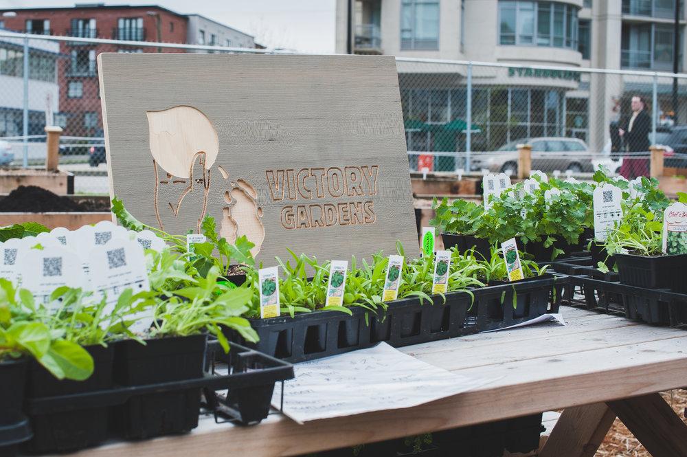 Shifting_Growth_Raised_Garden Beds_Community_Garden_Vancouver - South_False_Creek_Garden - 7.jpg