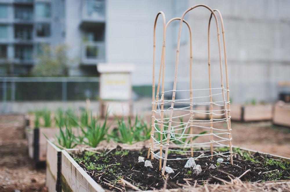 Shifting_Growth_Raised_Garden Beds_Community_Garden_Vancouver - South_False_Creek_Garden - 11.jpg