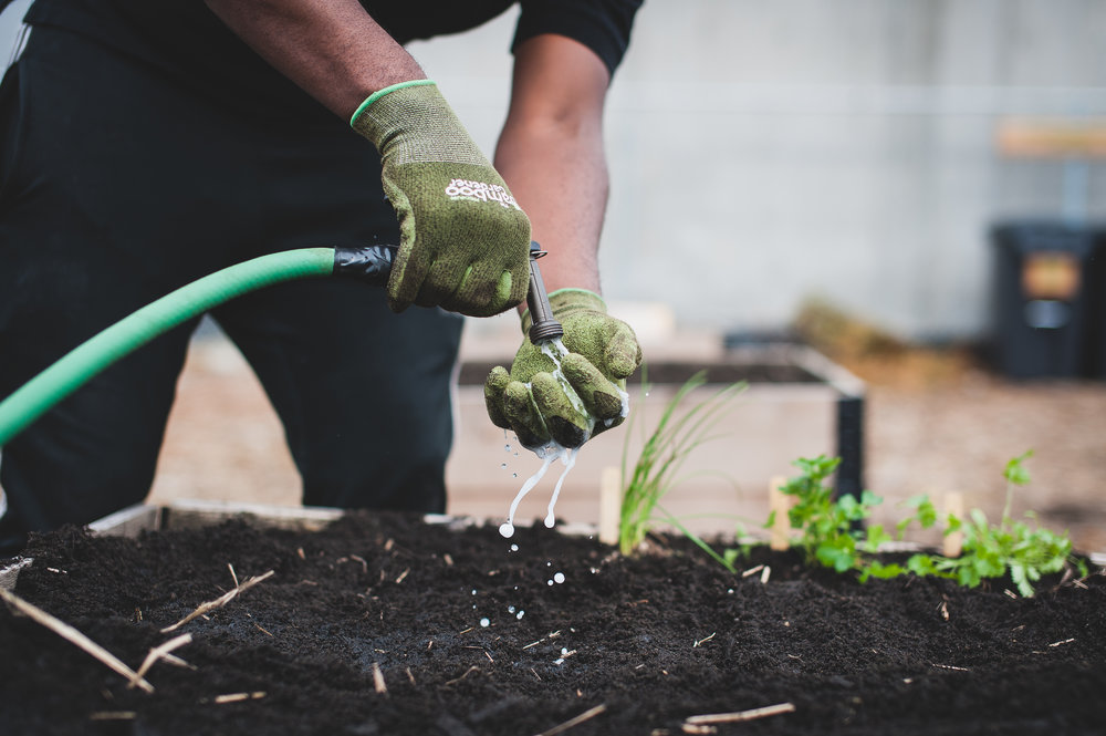Shifting_Growth_Raised_Garden Beds_Community_Garden_Vancouver - South_False_Creek_Garden - 12.jpg