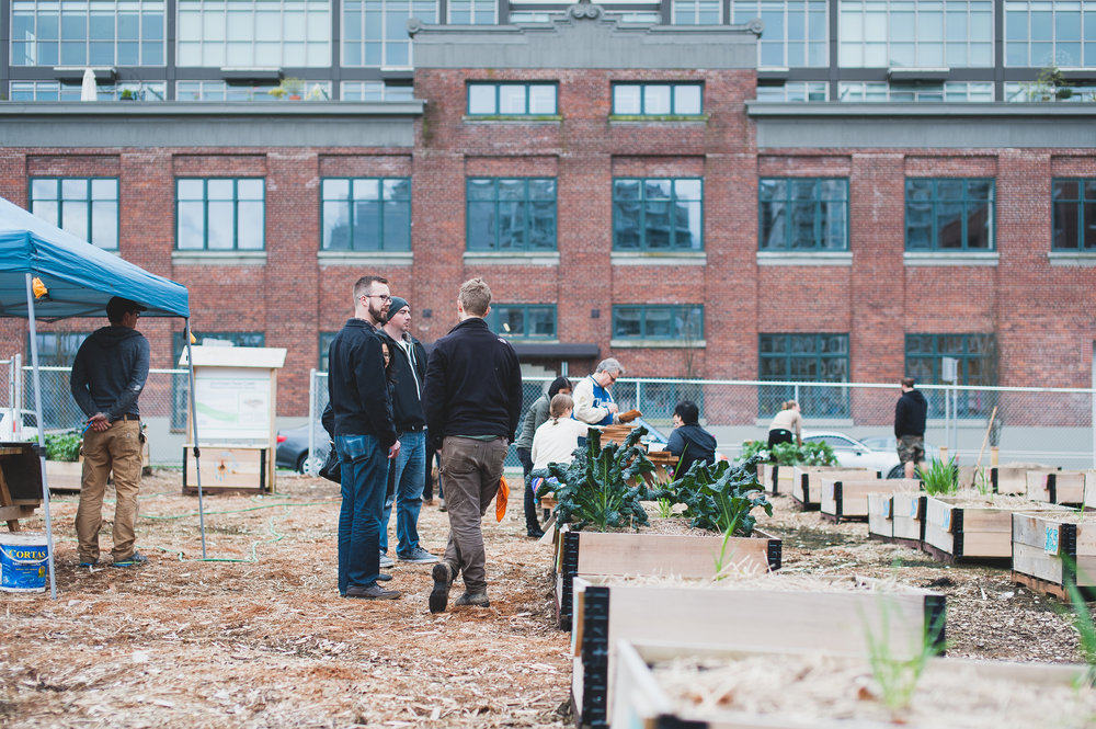 Shifting_Growth_Raised_Garden Beds_Community_Garden_Vancouver - South_False_Creek_Garden - 16.jpg