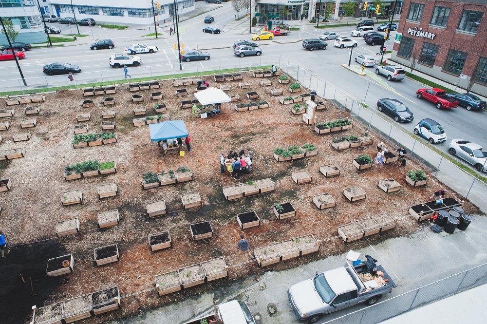 Shifting_Growth_Raised_Garden Beds_Community_Garden_Vancouver - South_False_Creek_Garden - 17.jpg