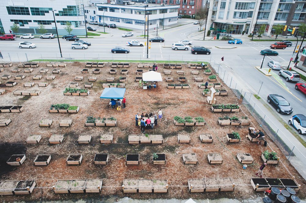 Shifting_Growth_Raised_Garden Beds_Community_Garden_Vancouver - South_False_Creek_Garden - 18.jpg