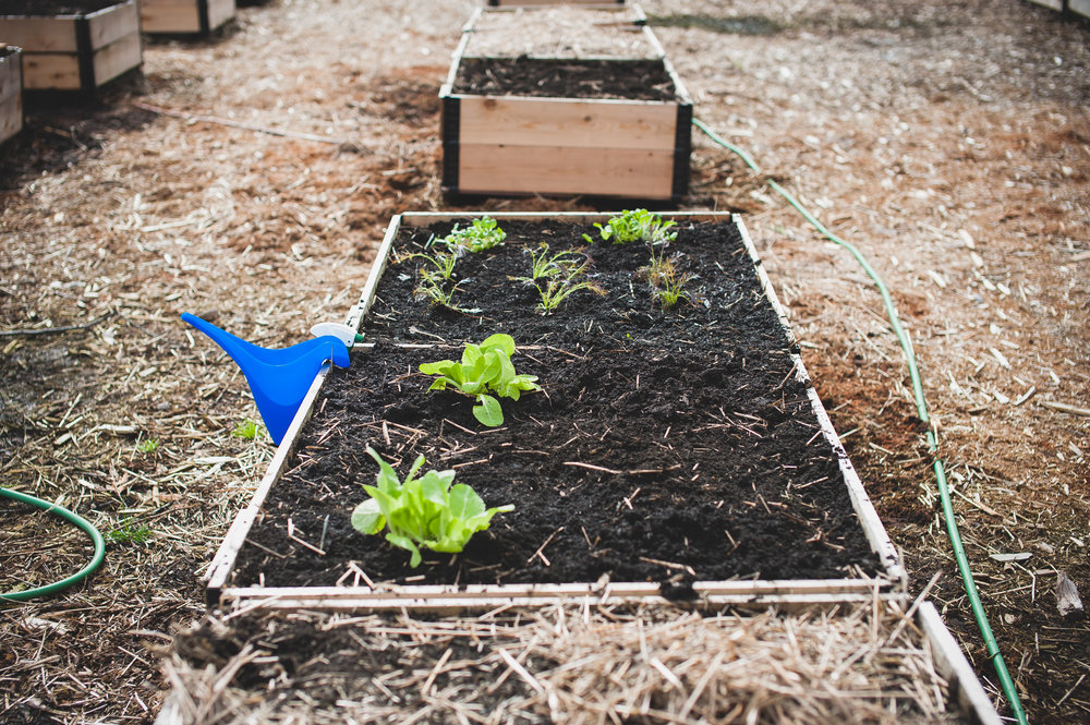 Shifting_Growth_Raised_Garden Beds_Community_Garden_Vancouver - South_False_Creek_Garden - 27.jpg