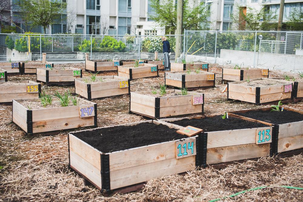 Shifting_Growth_Raised_Garden Beds_Community_Garden_Vancouver - South_False_Creek_Garden - 28.jpg