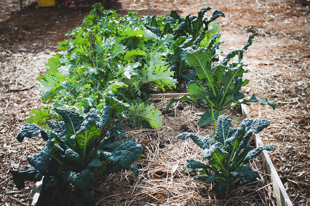 Shifting_Growth_Raised_Garden Beds_Community_Garden_Vancouver - South_False_Creek_Garden - 29.jpg