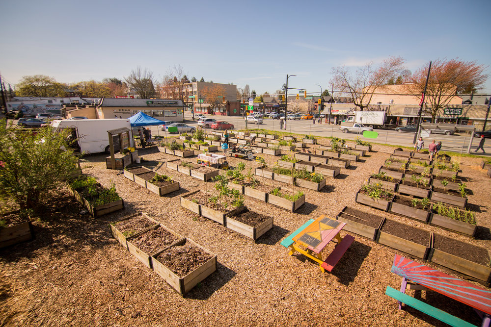 Raised_Garden_Bed_The_Drive_Temporary_Community_Garden_04.2016_Shifting_Growth_161.jpg