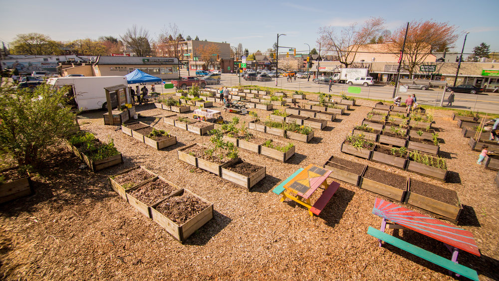 Raised_Garden_Bed_The_Drive_Temporary_Community_Garden_04.2016_Shifting_Growth_162.jpg
