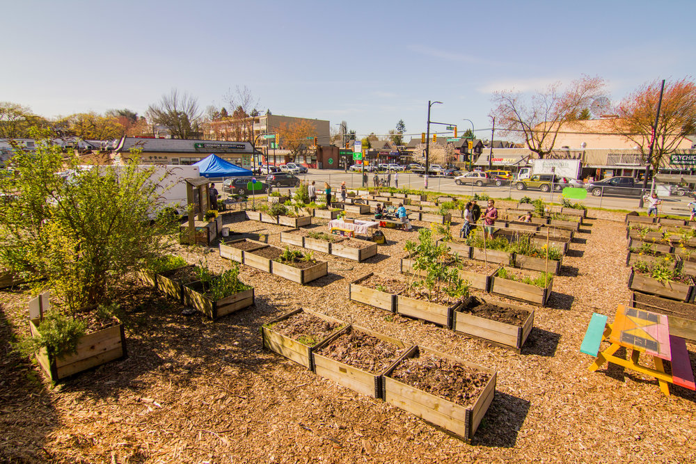 Raised_Garden_Bed_The_Drive_Temporary_Community_Garden_04.2016_Shifting_Growth_192.jpg
