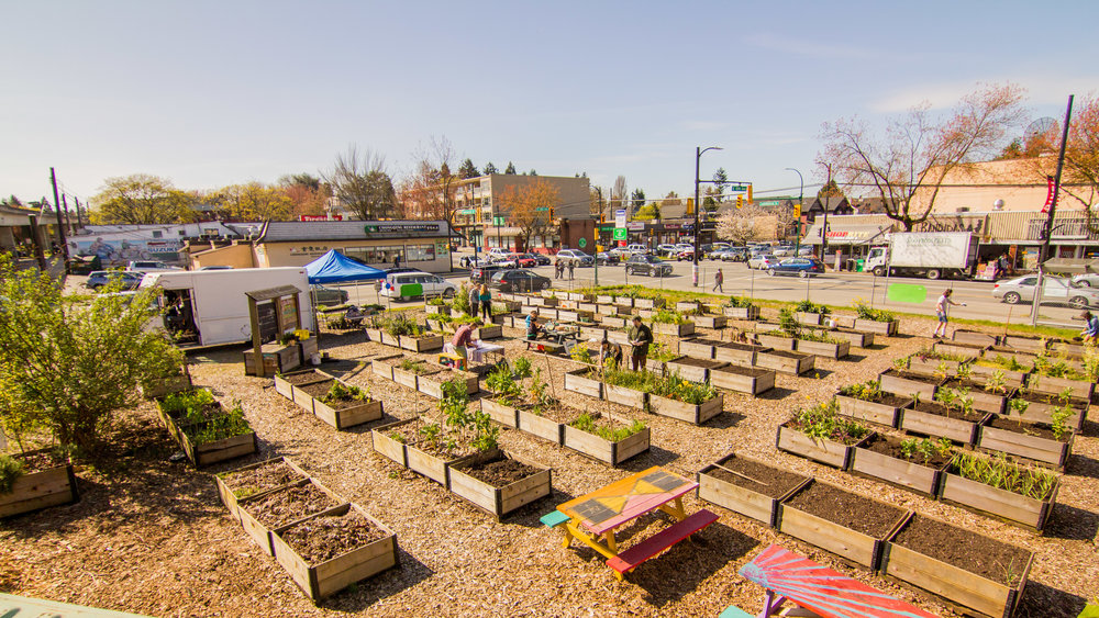 Raised_Garden_Bed_The_Drive_Temporary_Community_Garden_04.2016_Shifting_Growth_193.jpg