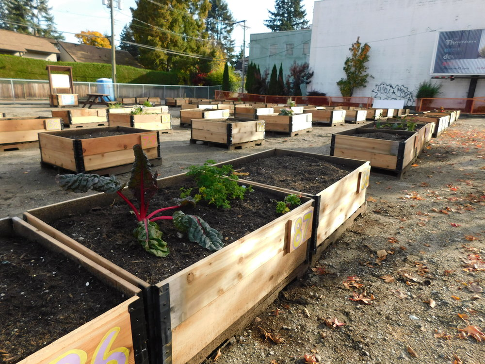 Cambie_16th_Vancouver_Community_Garden_Builders-0013.JPG