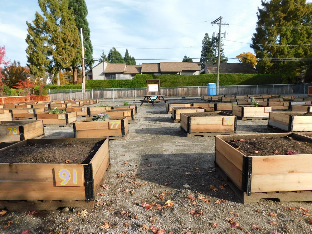 Cambie_16th_Vancouver_Community_Garden_Builders-0014.JPG