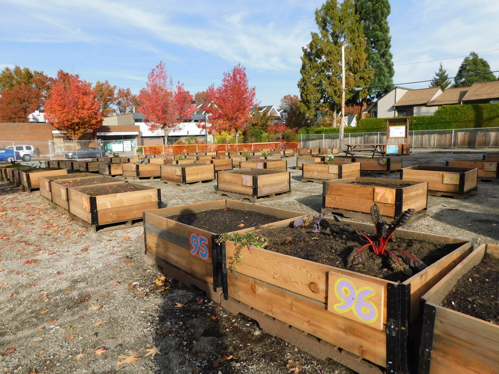 Cambie_16th_Vancouver_Community_Garden_Builders-0015.JPG