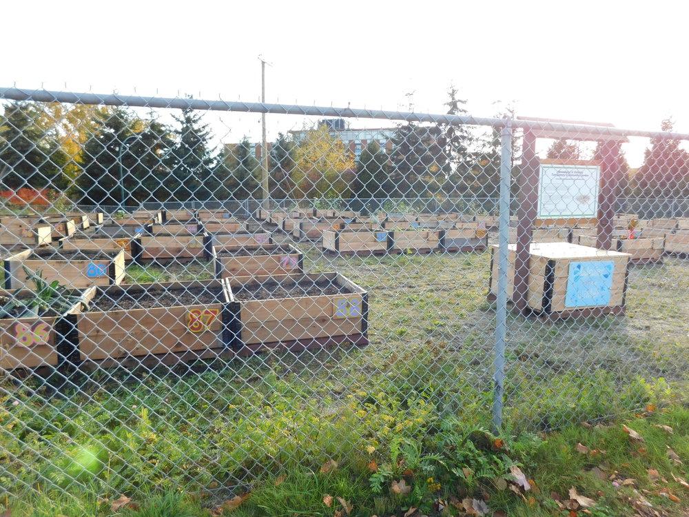 Victoria_Broadway_Vancouver_Community_Garden_Builders-0001.JPG