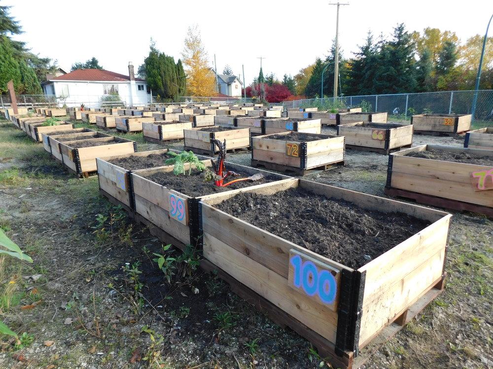 Victoria_Broadway_Vancouver_Community_Garden_Builders-0003.JPG