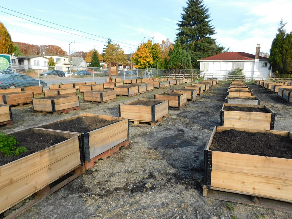 Victoria_Broadway_Vancouver_Community_Garden_Builders-0010.JPG
