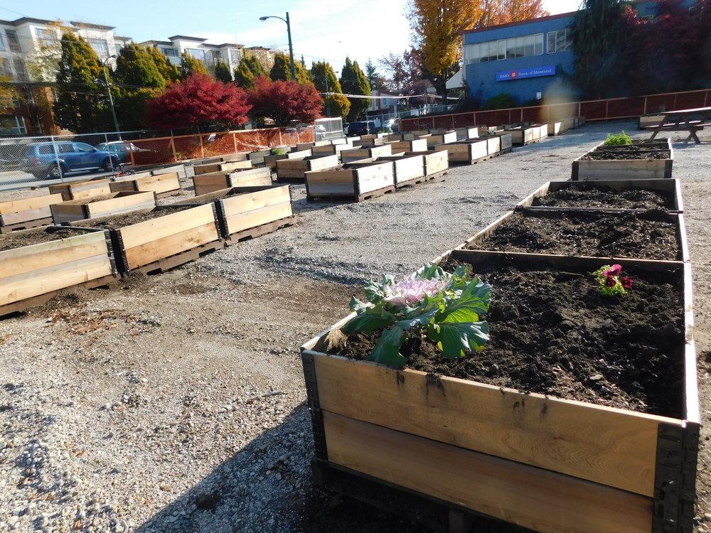 oak_41st_Vancouver_Community_Garden_Builders-0008.JPG