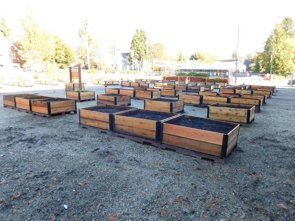 Dunbar_40th_Vancouver_Community_Garden_Builders-0005.JPG