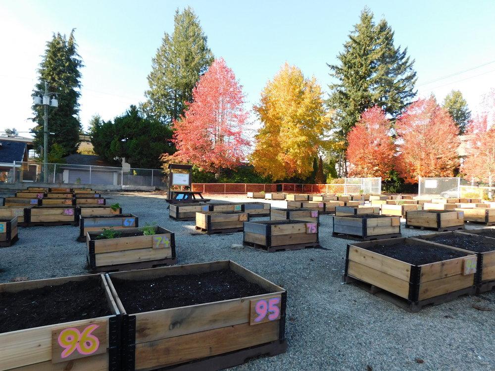 Dunbar_40th_Vancouver_Community_Garden_Builders-0009.JPG