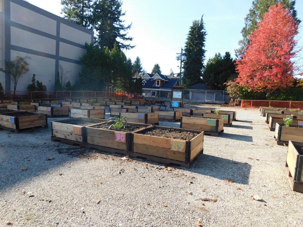 Dunbar_40th_Vancouver_Community_Garden_Builders-0010.JPG