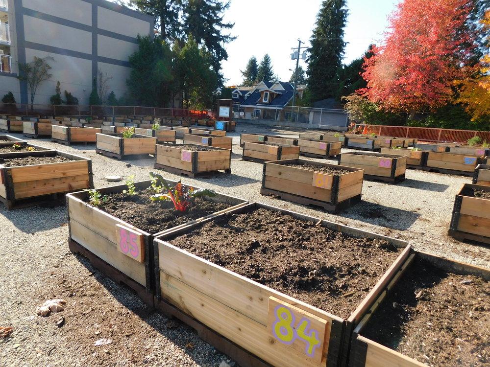 Dunbar_40th_Vancouver_Community_Garden_Builders-0012.JPG