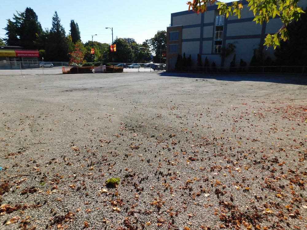 community_garden_vacant_grow_vancouver-0011.JPG