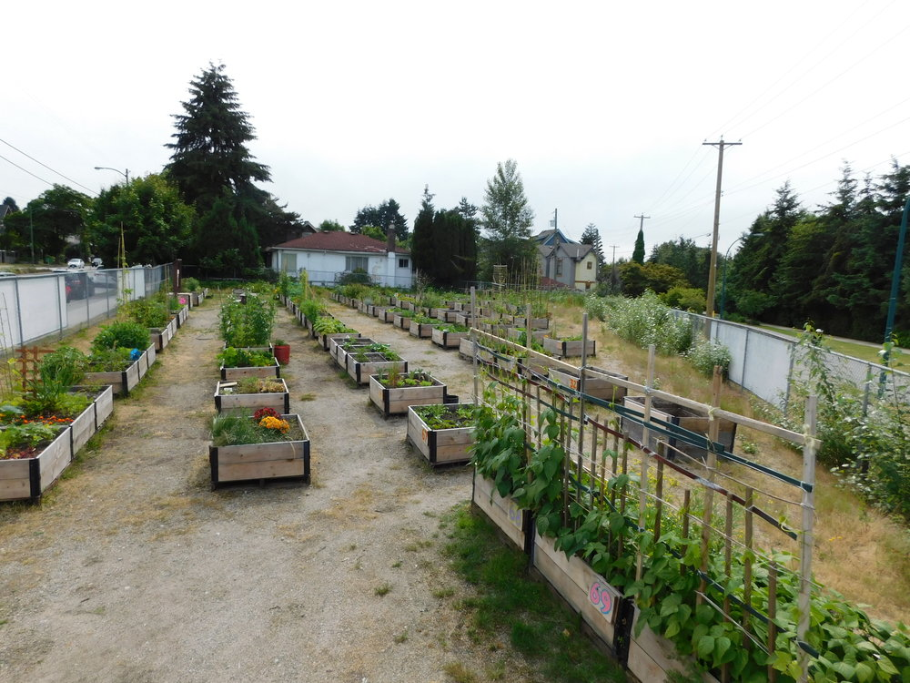 broadway-victoria-temporary-community-garden.jpg