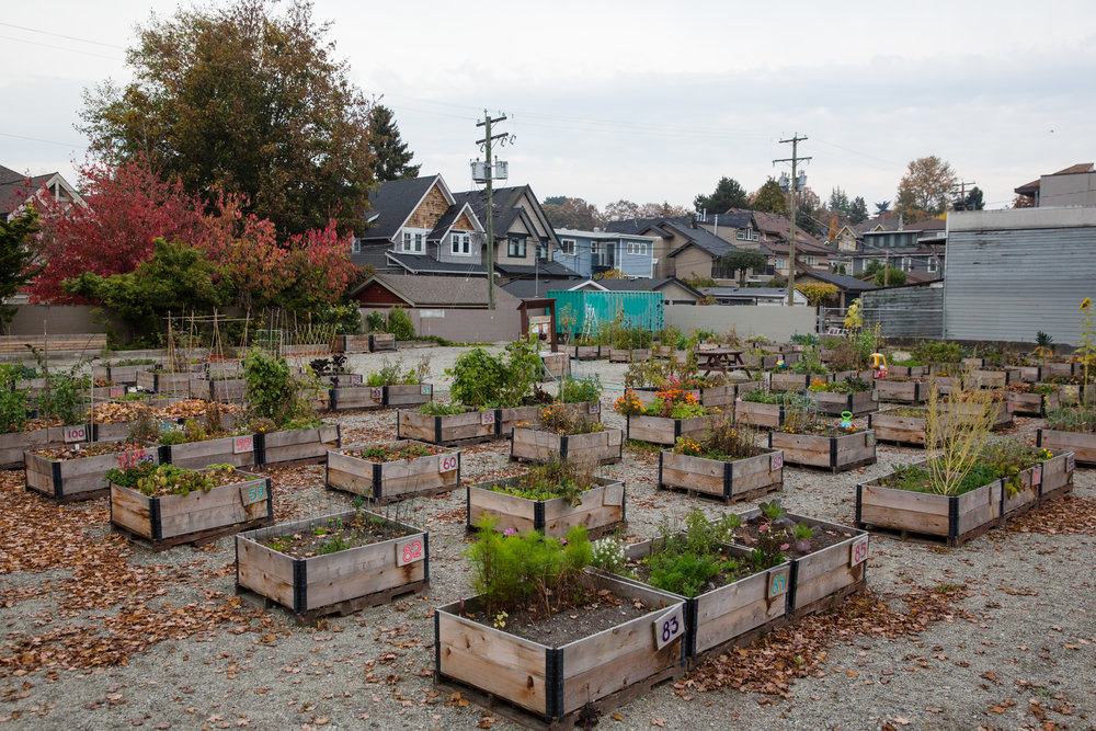 4th_macdonald_temporary_community_garden