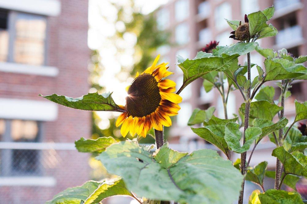 Southeast_False_Creek_Community_Garden_Raised-Beds_2-06.2015.jpg