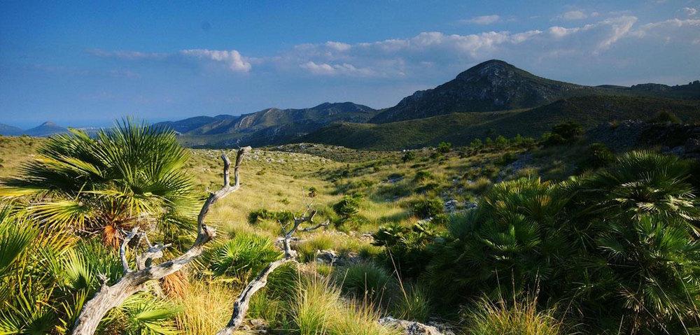 parc natural de la peninsula de llevant. Mallorca