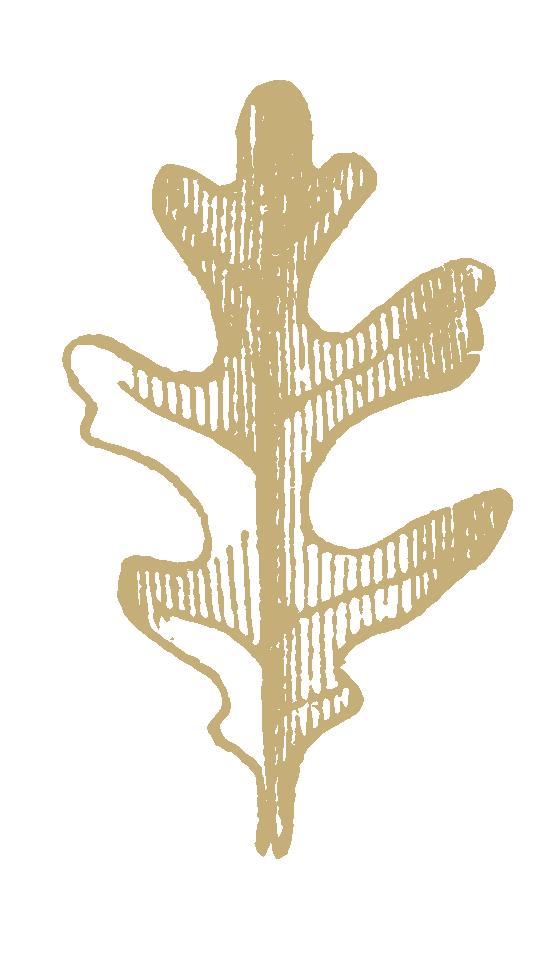 gold-oak.png