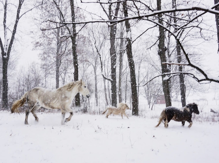 magical horses running in the snowy forest