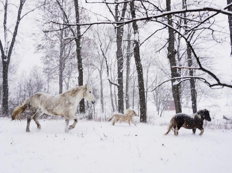 horses-running-white-forest